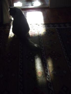 fin in shadows