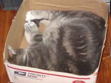 arwen asleep in box