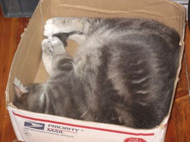 arwen asleep in box