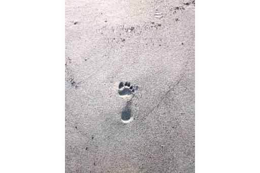 footprint in Alaska sand