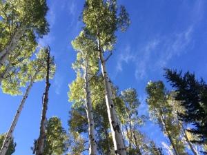 Flagstaff Aspen